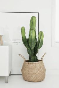 12.-kaktus
